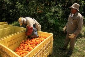 Nueva constancia para el transporte interjurisdiccional de trabajadores relacionados a actividades de producción, distribución y comercialización agropecuaria y de pesca.